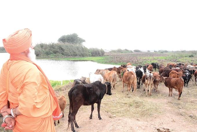Avtar Gaushala An effort to shelter homeless and speechless animals