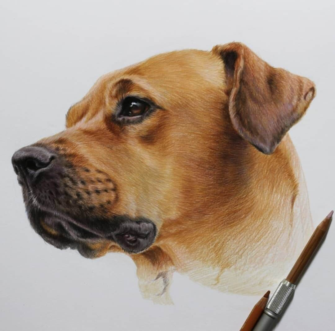 07-A-dog-with-a-look-of-Longing-Jae-Kyung-Domestic-and-Wild-Animals-Pencil-Drawings-www-designstack-co