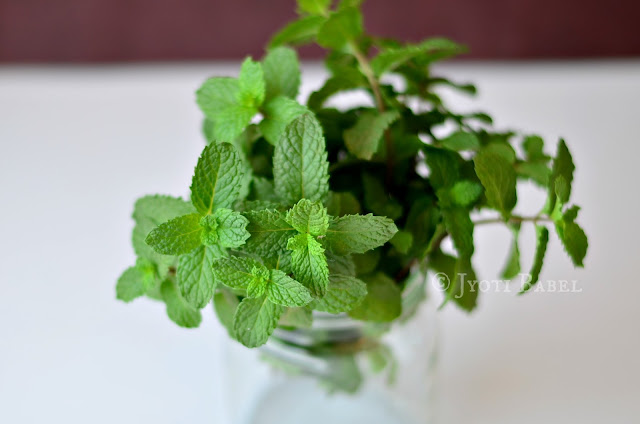 A bunch of mint leaves