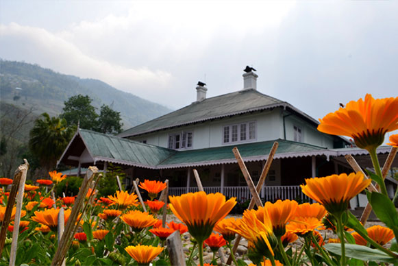 Darjeeling Tea Bungalows: A Must in Your Travel List 1