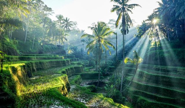 Bali in indonesiaan wonderful