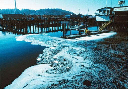 Scum from the discharge pipes of a nearby wood pulp plant pollutes the waters of a fishing port in Washington State