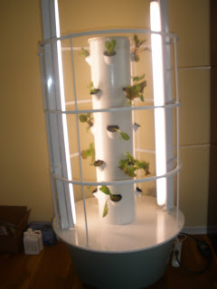 Living Intentionally By God S Grace 37 The Tower Garden