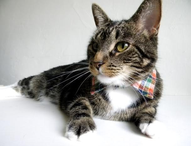 Κολάρο για την γάτα σας απο παλιό πουκάμισο