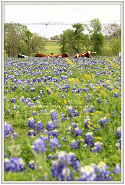 Texas Bluebonnets-Wildflower-Field-Springtime-Texas-From My Front Porch To Yours