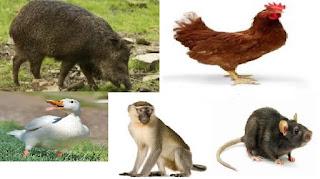 Pengelompokkan Hewan Berdasarkan Jenis Makanan