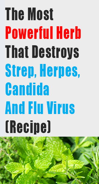 The Most Powerful Herb That Destroys Strep, Herpes