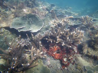 Live Corals at Pretty Beach