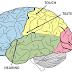 انسانی دماغ کے اسرار