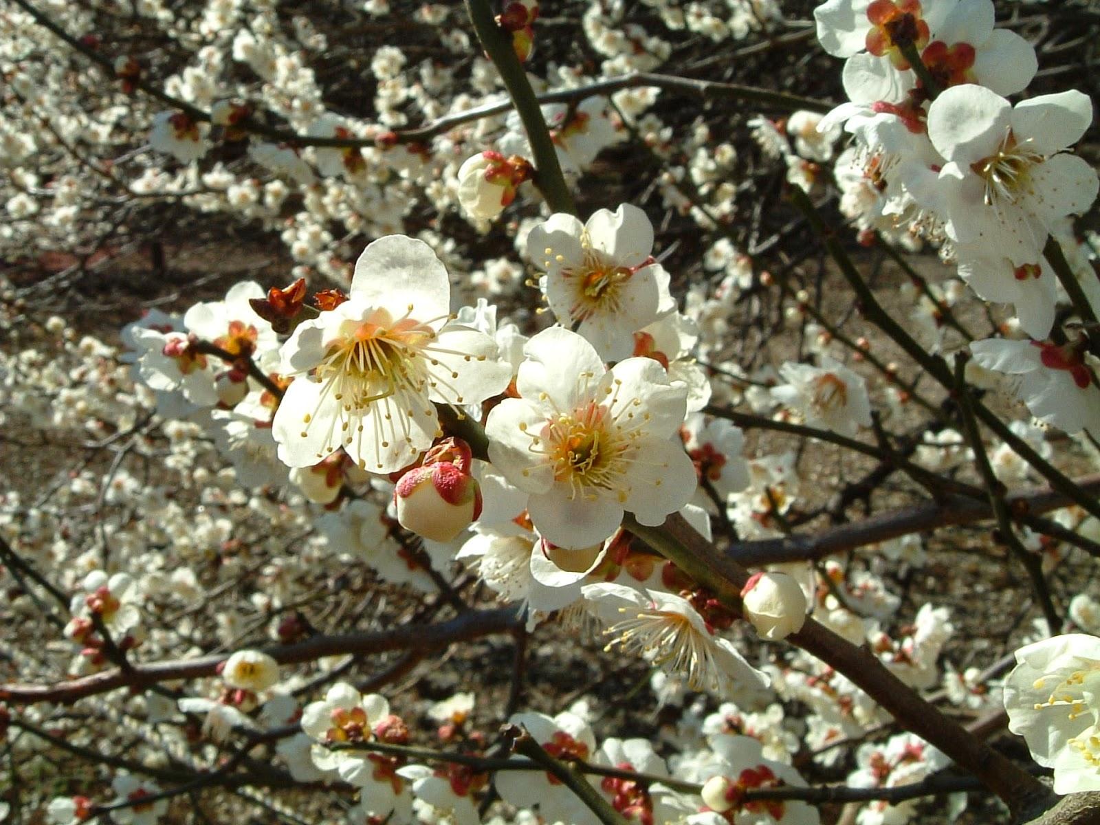 Passion Wing Chun Mei Hua La Fleur De Prunier