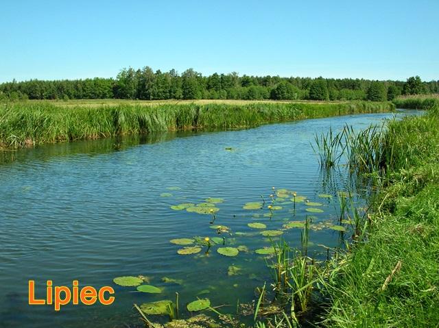 rzeka i kwitnące grążele