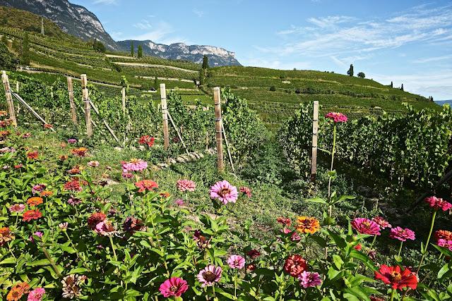Alois Lageder biodynamic wines Alto Adige