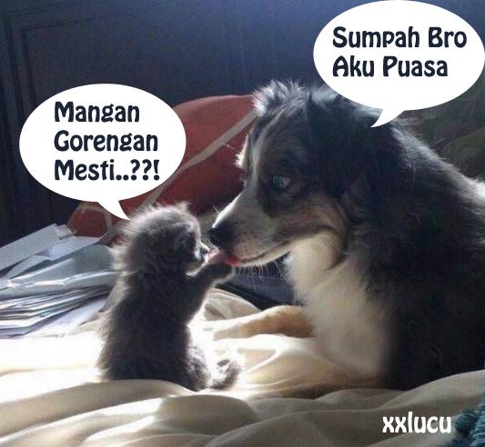 gambar kucing dan anjing berdebat