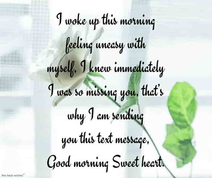 good morning love sms letter image with white rose