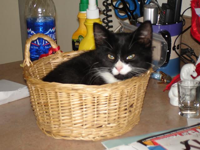 My Charli Cat