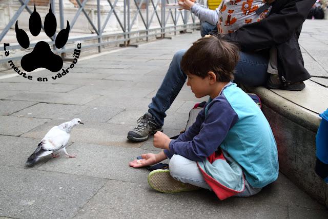 moyen-loup-pigeon-venise