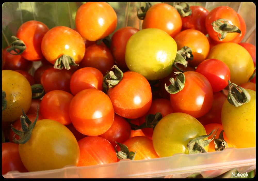 tomates cerise  de  la ferme de Servigny