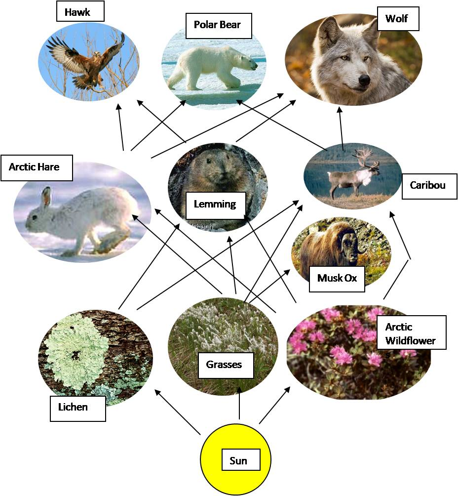 Which Organism Depicted In This Food Web Is A Producer