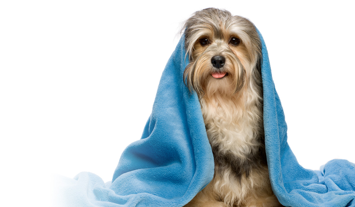 Come fare il bagno al cane. - My fashion dog - Il blog del cane