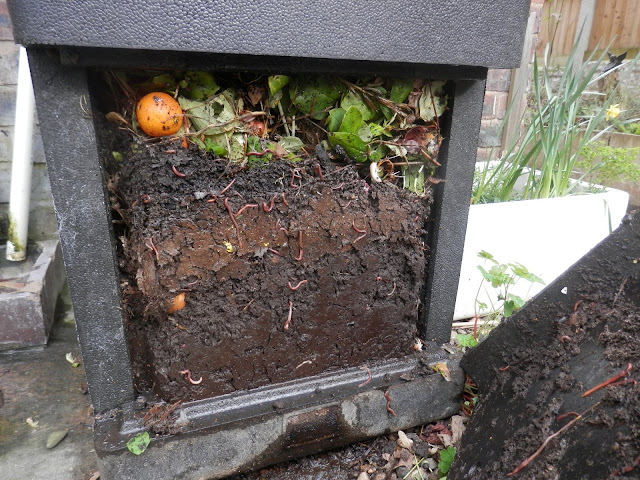 Diary of a permaculture (ish) garden, February and March 2019. from UK garden blogger secondhandsusie.blogspot.com #permaculturegarden #ukpermaculture #suburbangardening #ukgarden #hotbin #raisedbeds #growfoodnotlawns #frontgardenallotment