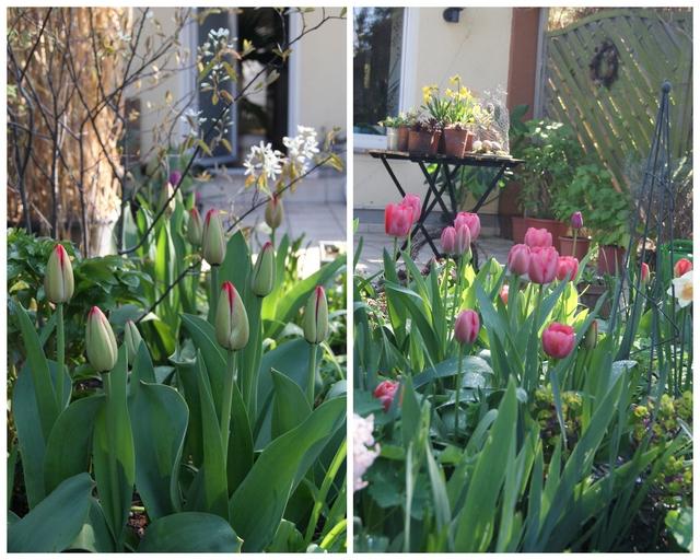 filz und garten gartenblog wann bilden tulpen bl ten aus und wann nicht. Black Bedroom Furniture Sets. Home Design Ideas