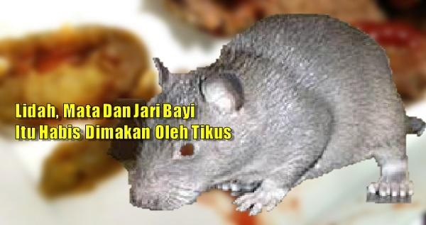 Bayi Perempuan Maut DiMakan Hidup-hidup Oleh Tikus