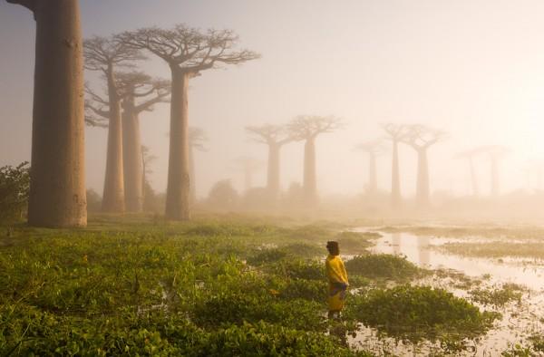 The Swamp by Marsel van Oosten