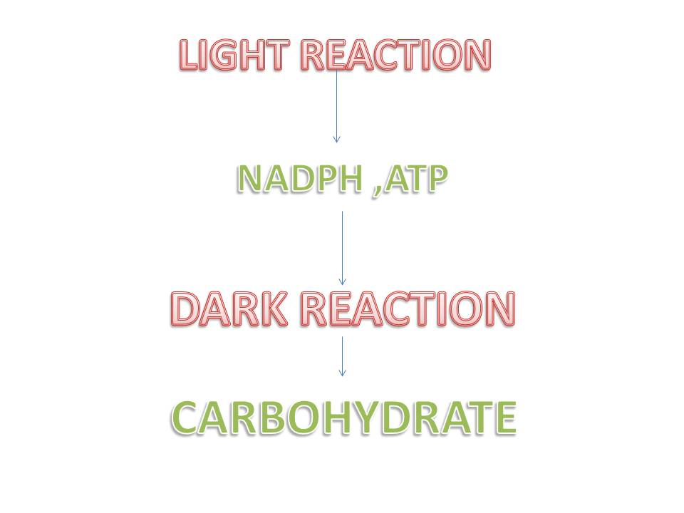 The light dependent reaction of photosynthesis publicscrutiny Gallery