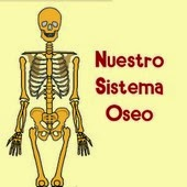 huesos, oseo, sistema, funcion, vertebrados, invertebrados, tecnologia, tic, educacion, educativo, deporte, esqueleto, estrategia, didactica, pedagogia