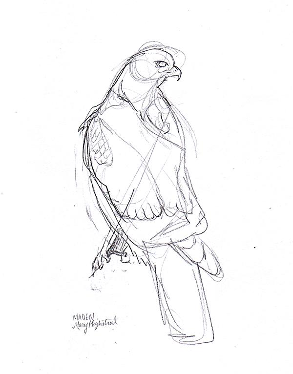 Hawk Study Art by Mary Highstreet