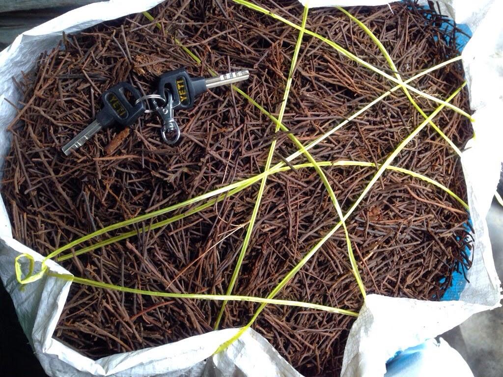 Dớn cọng (Thường dùng trồng Cattleya)