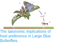https://sciencythoughts.blogspot.com/2013/03/the-taxonomic-implications-of-host.html