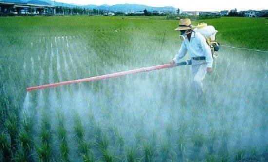 Το ΙΤΕ ανακάλυψε μηχανισμό για το φαινόμενο της ανθεκτικότητας των κουνουπιών στα εντομοκτόνα