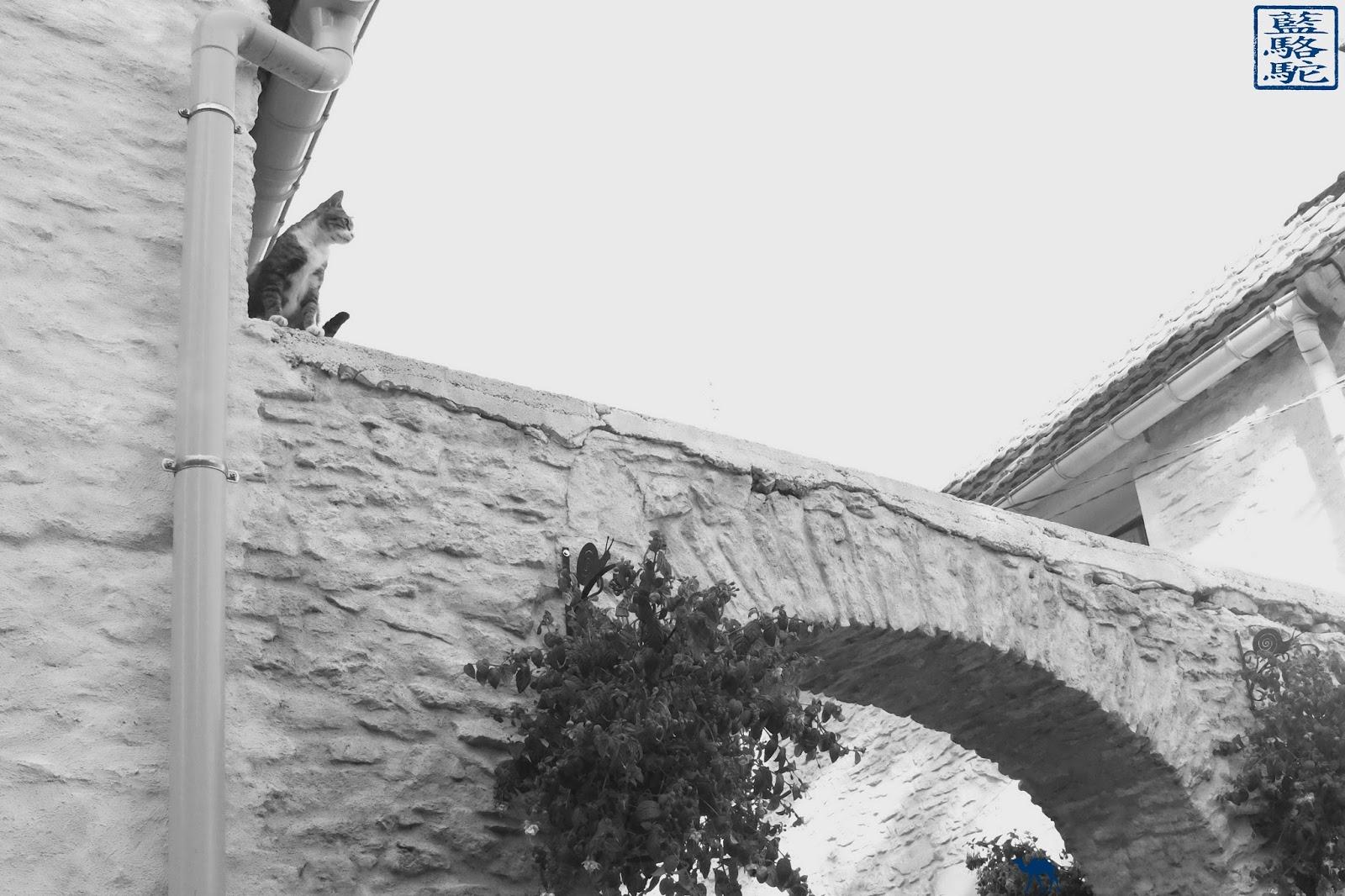 Le Chameau Bleu -  Chat de Santenay
