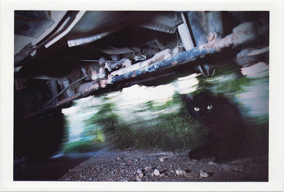 dirty photos - noah's ark fauna photo of black cat under car