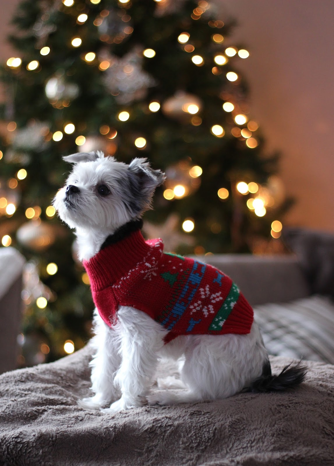 dog-christmas-jumpers