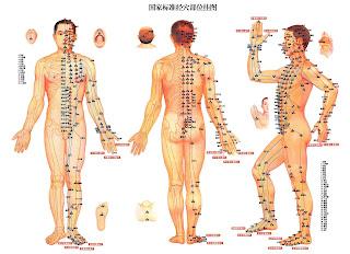 LOS RIÑONES EN LA MEDICINA TRADICIONAL CHINA (MTC)