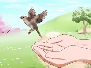 How to Feed a Wild Bird Child