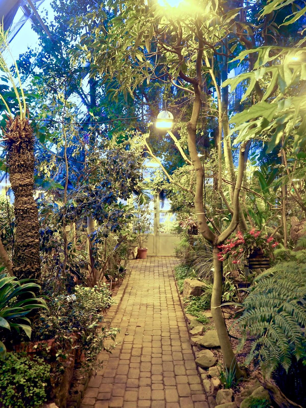 Valo, lämpö ja rauha - niitä kaikkia on tarjolla Turun yliopiston kasvitieteellisessä puutarhassa.