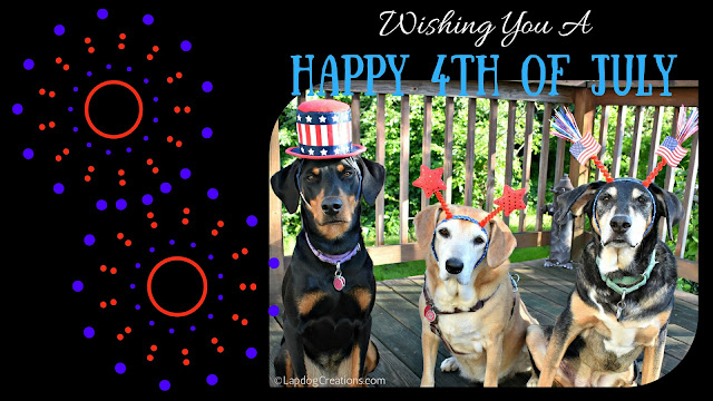 3 rescue dogs fourth of july