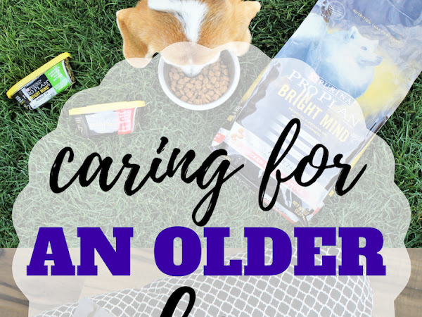 Simple Way of Caring for an Older Dog