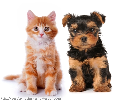 Funny red kitten and puppy.