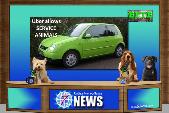 BFTB NETWoof Dog News with Uber story on backdrop