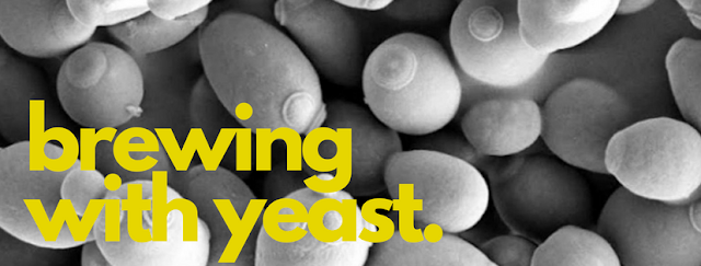 brewing with yeast