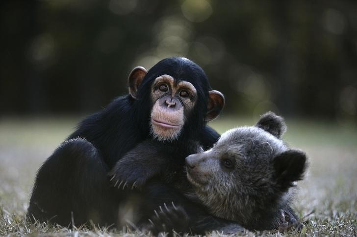 10 sudden Animal Friendships That ar completely lovely PART 2