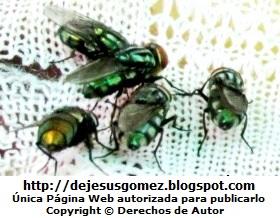 Foto de moscas con cuerpo verde de Jesus Gómez