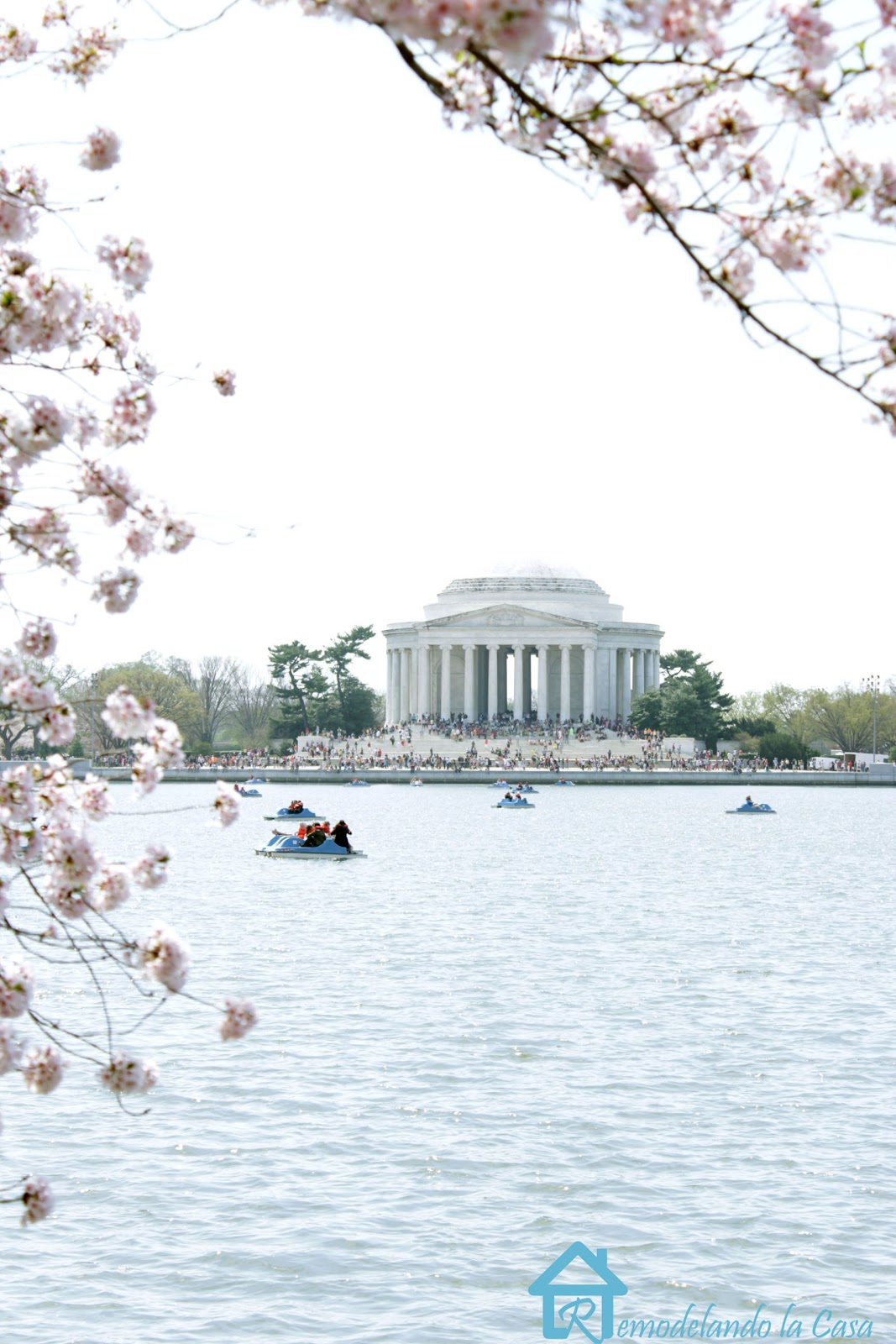 Cherry blossom festival at washington D.C. overlooking the Jefferson Memorial past the tidal basin