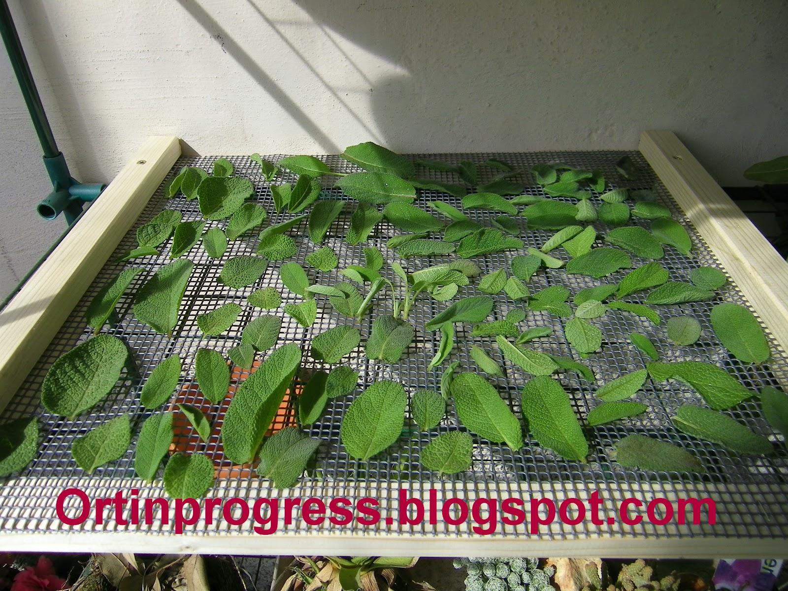 Come Seccare Le Piante orti in progress: come essiccare le erbe aromatiche.