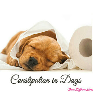 HOW TO GET RID OF CONSTIPATION IN DOGS 1