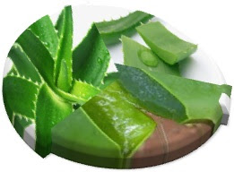 aloe vera - nutitive- soin - laxative -  gel - Vitamine - soins -  aux naturel
